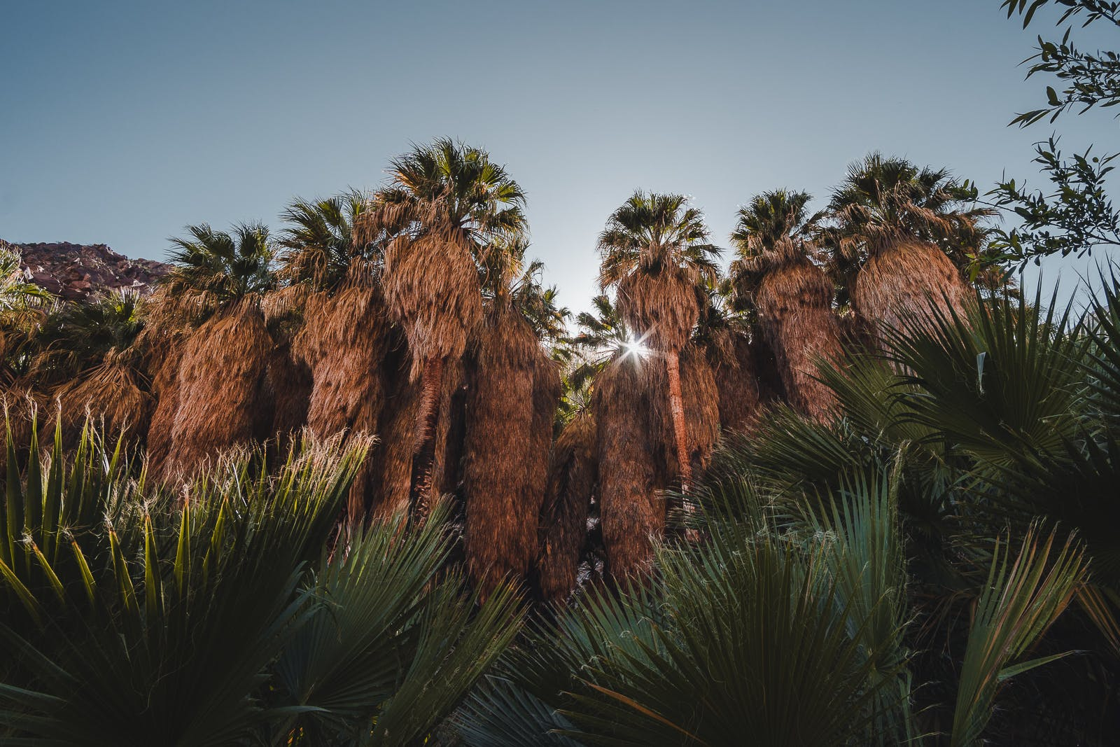 palm trees along the Borrego Palm Canyon Trail