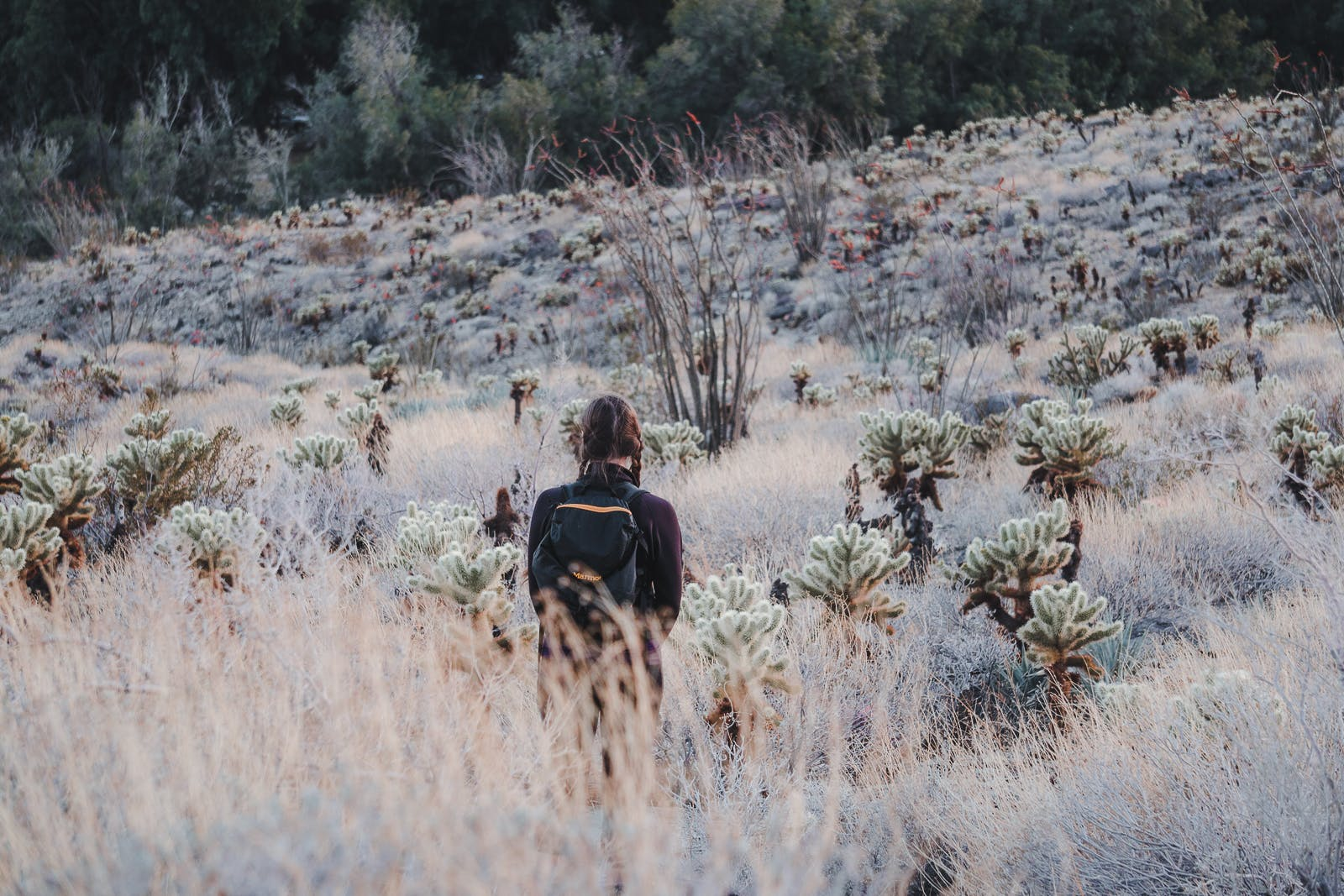 female hiker in the distance facing field of cacti, Cactus Loop Trail