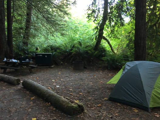 Mill Creek - Del Norte Coast Redwoods State Park, CA | The Dyrt