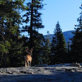 Dorst Creek Campground, CA | The Dyrt