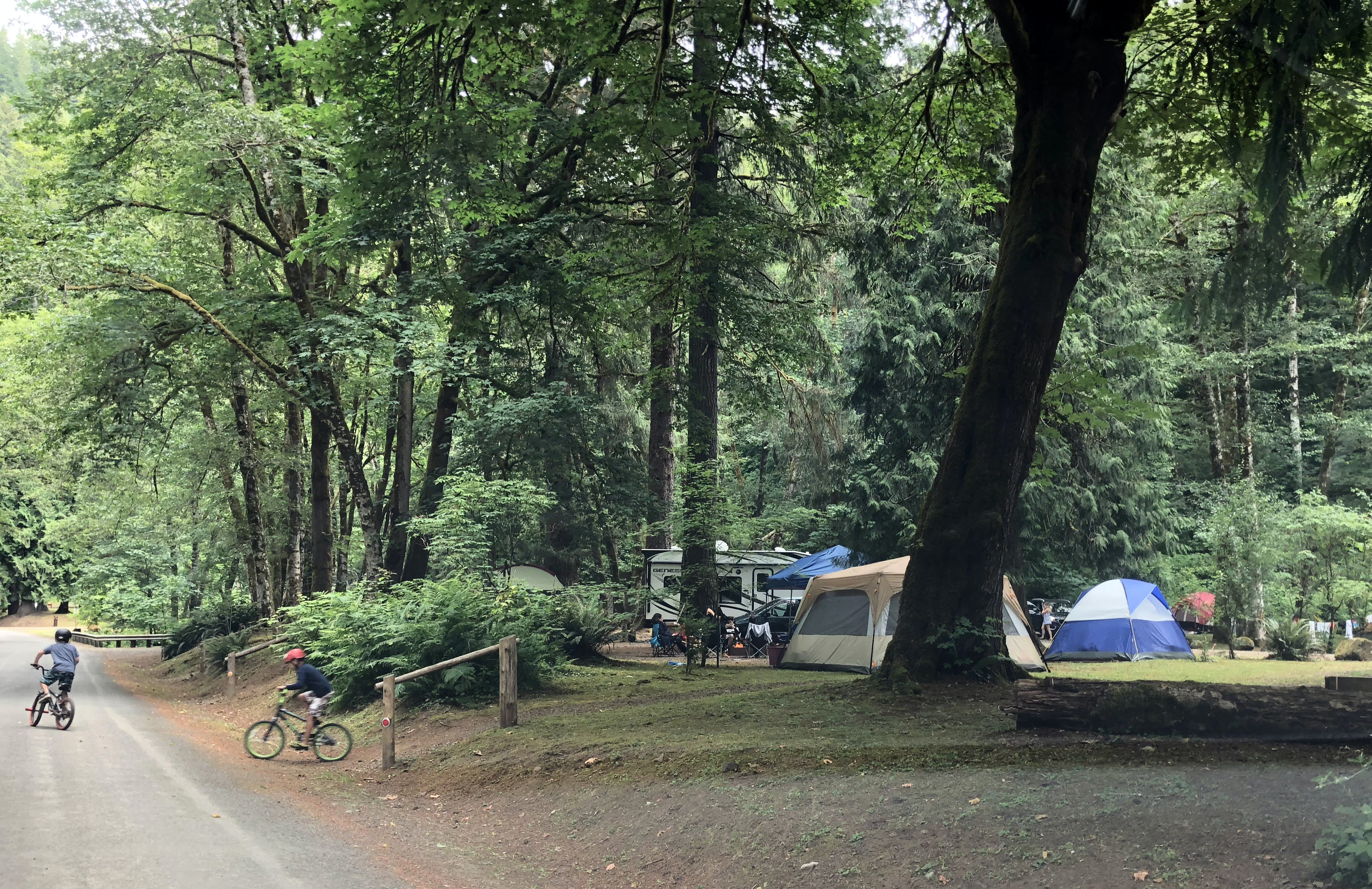 Henry Rierson Spruce Run Campground, OR | The Dyrt on