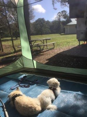 Santos Trailhead & Campground, FL | The Dyrt