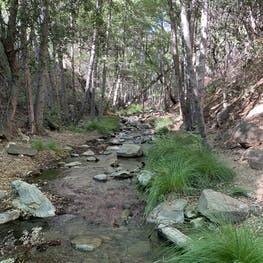 The Best Camping Near Los Padres National Forest