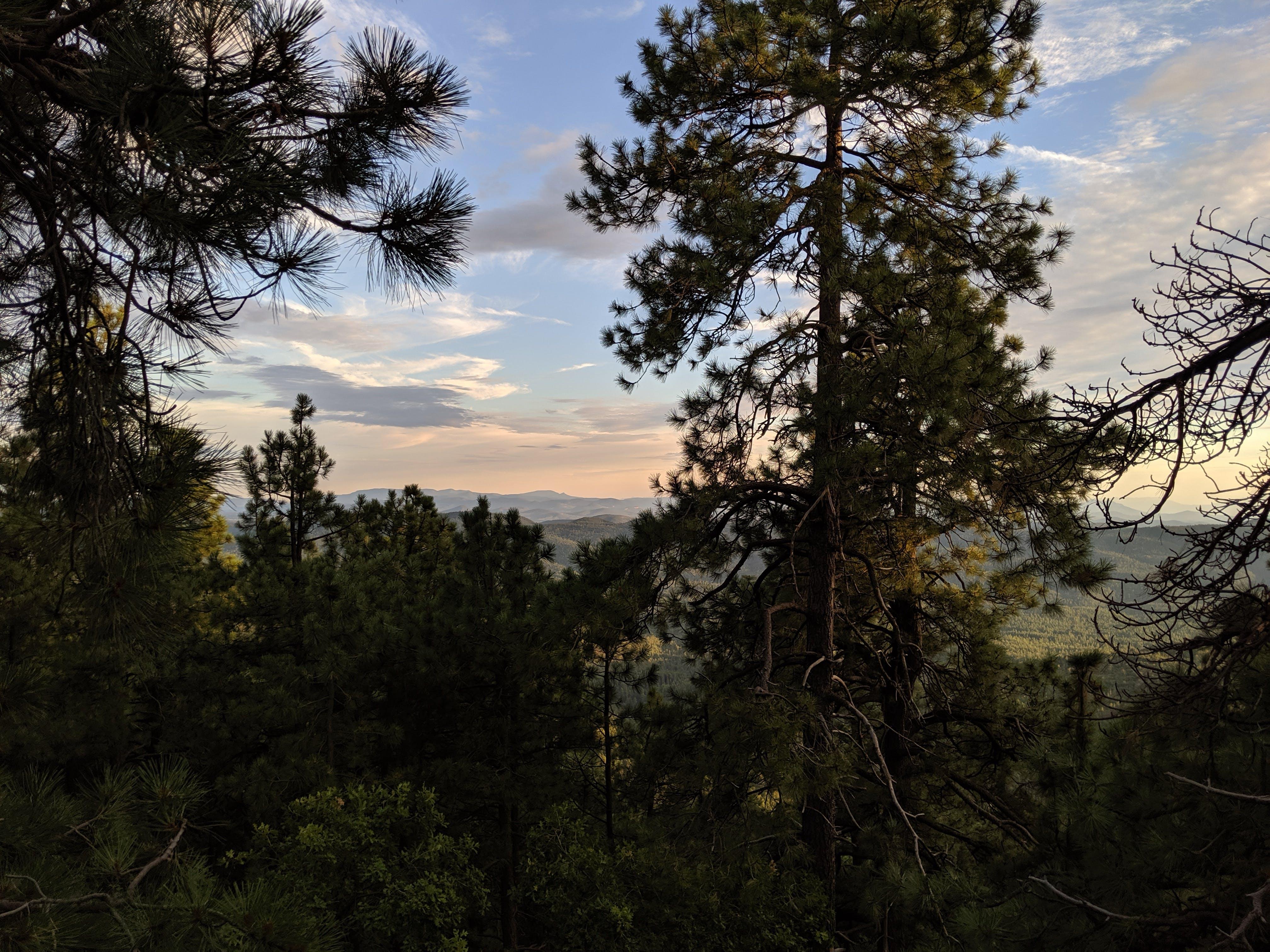 Fr 9350 Campground, AZ | The Dyrt