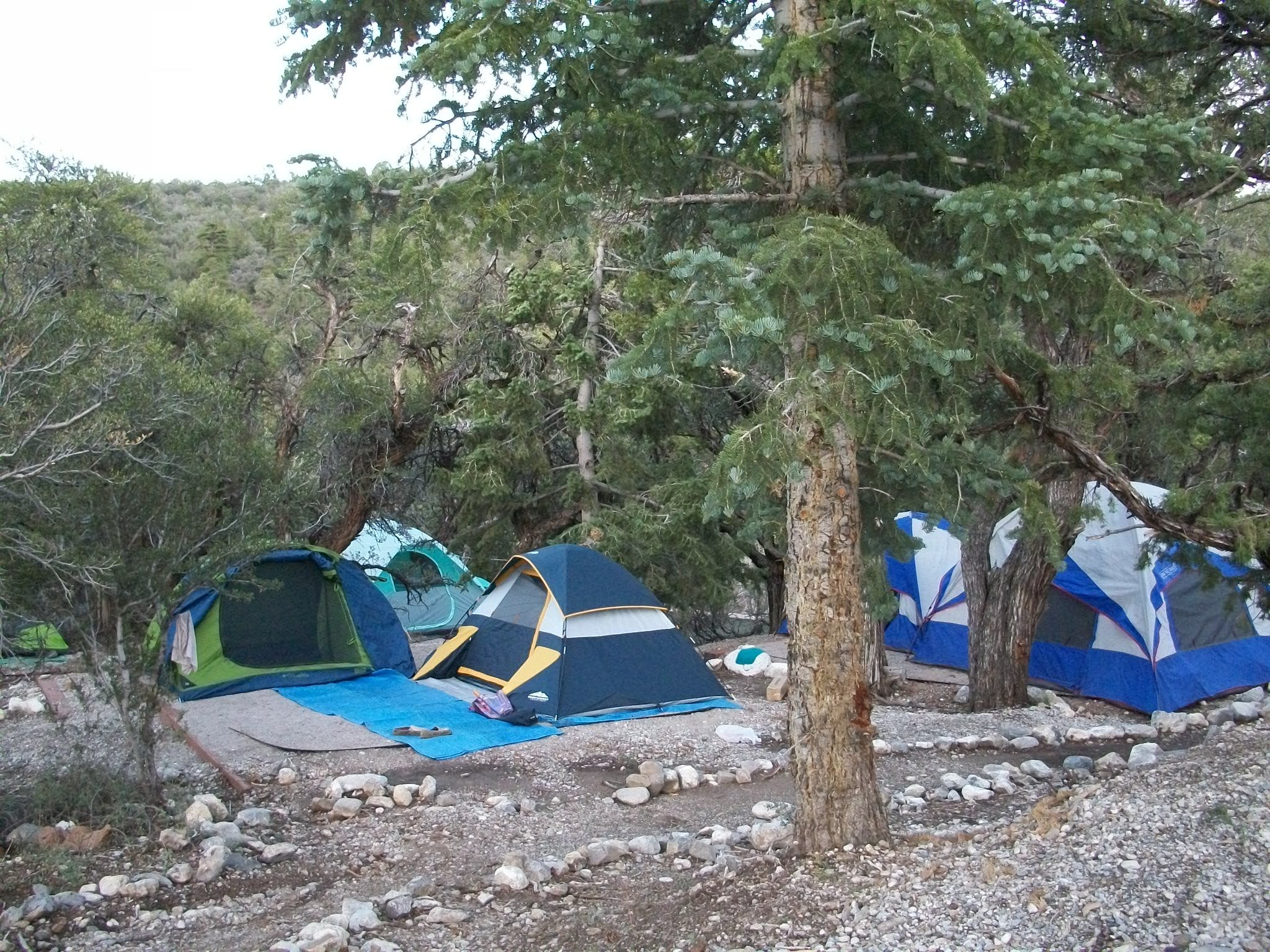 Mahogany Grove campground Mt Charleston camping