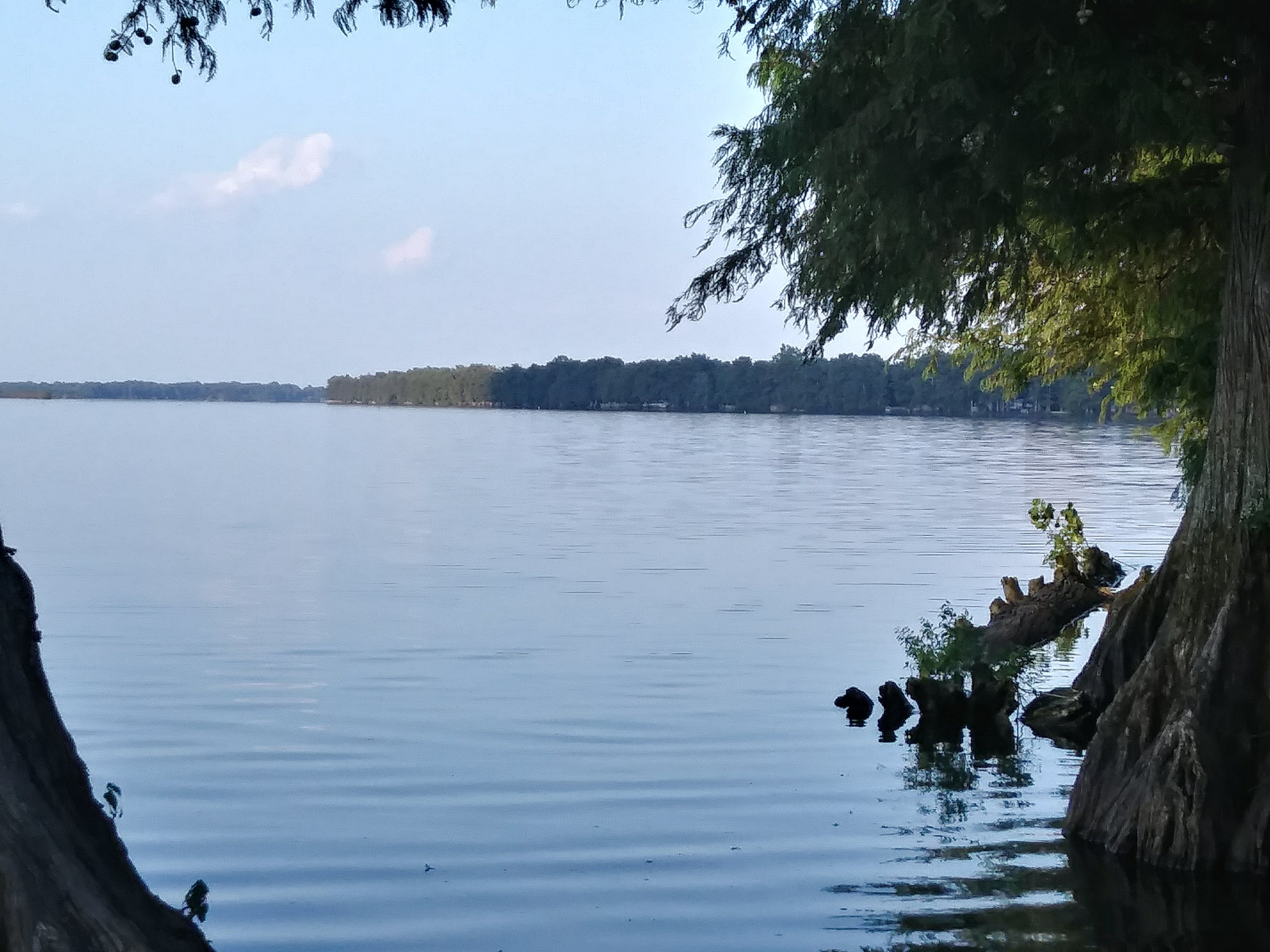 Reelfoot Lake State Park, TN | Maria L  reviews Reelfoot Lake State