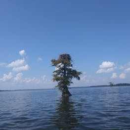 Reelfoot Lake State Park, TN | The Dyrt