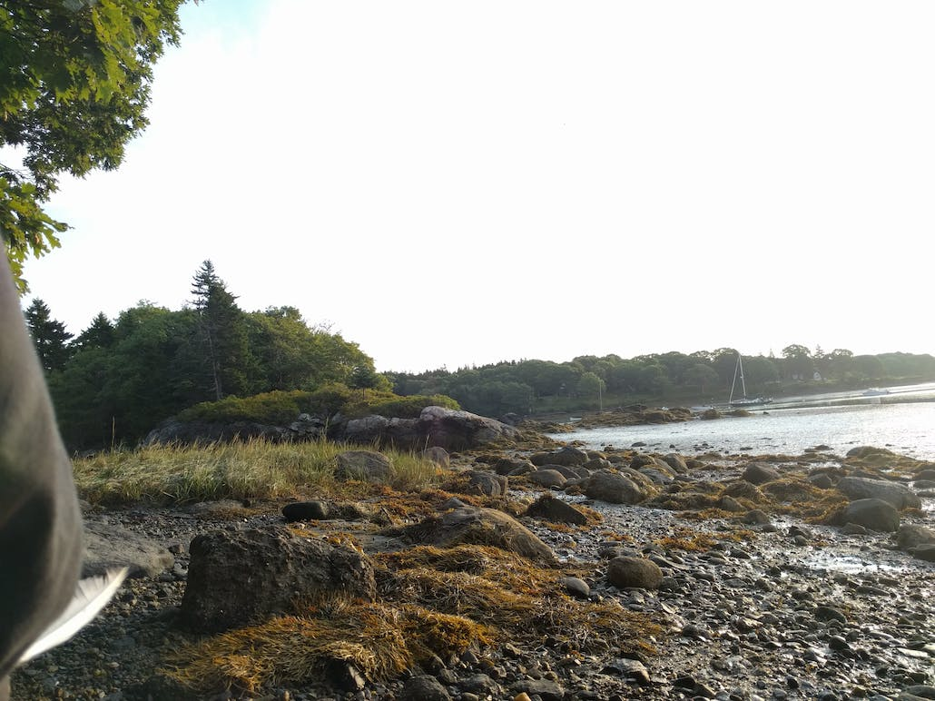 A view of the mud shore and tidal pools, perfect for crab catching on Hermit Island, Maine.