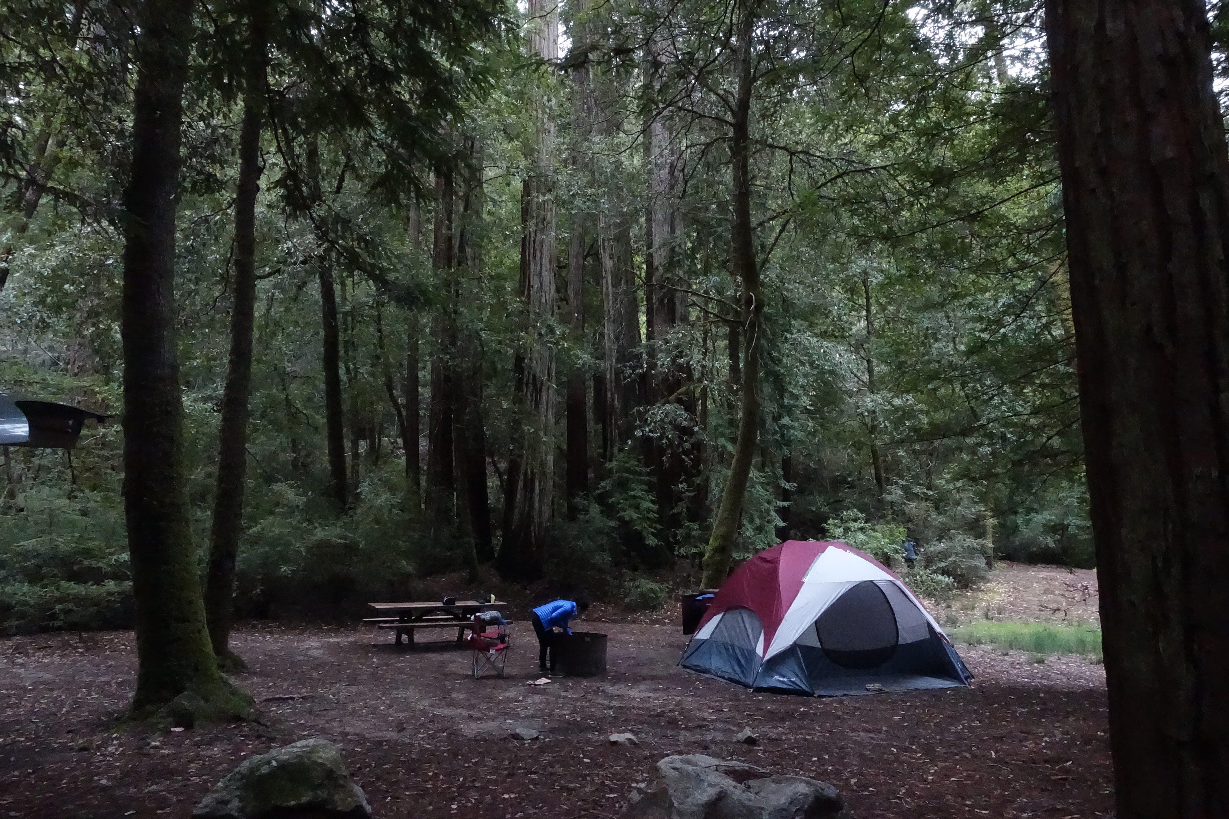 Big Basin Redwoods State Park, CA   The Dyrt