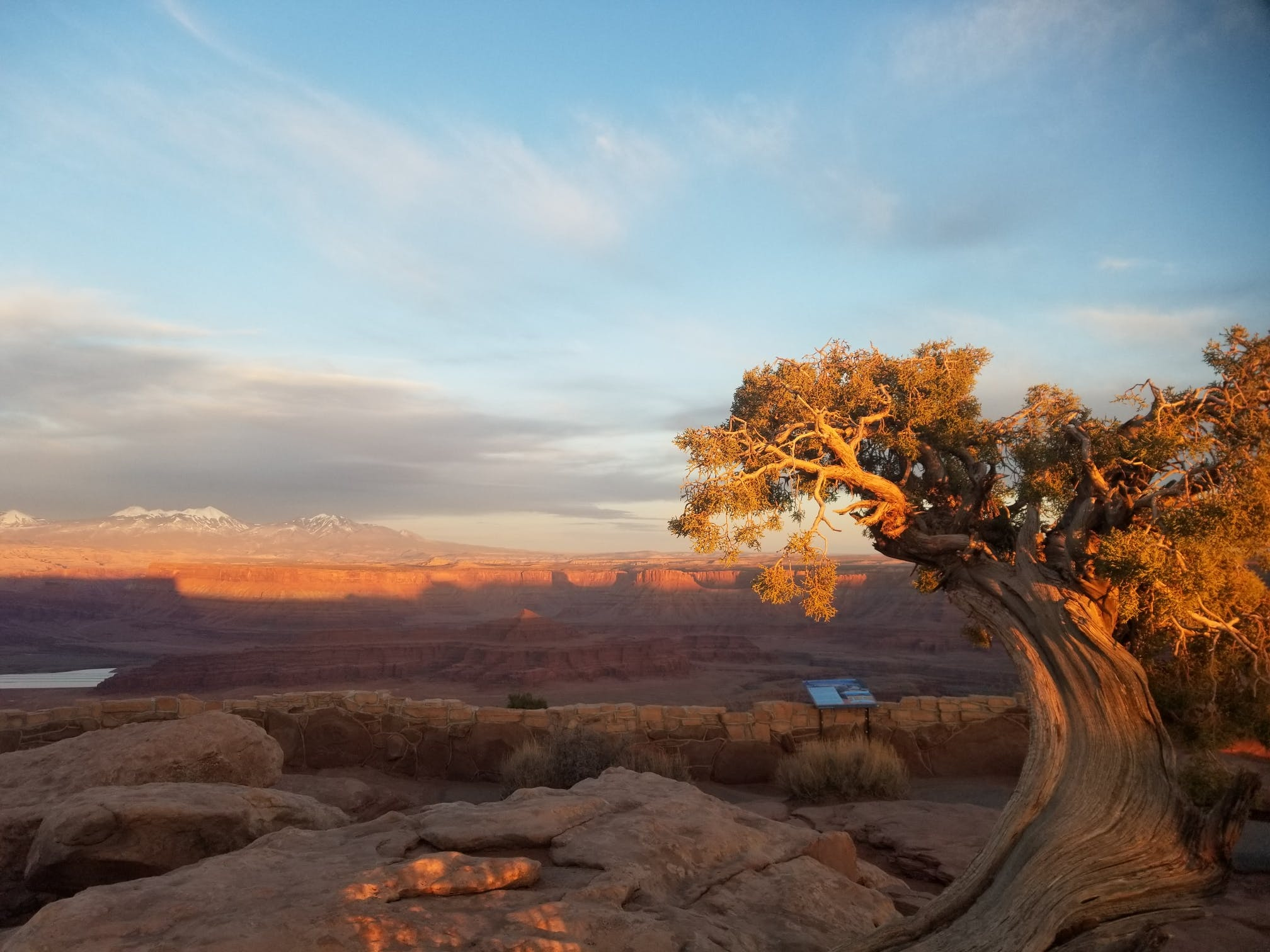tree at dead horse point state park, utah